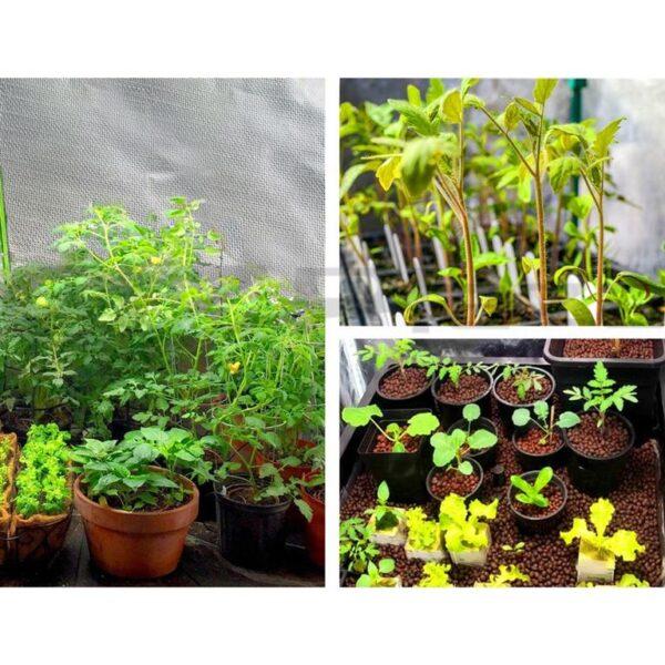 Greenfingers Hydroponics Grow Tent Kits Hydroponic Grow System Black 60X60X90CM 600D Oxford